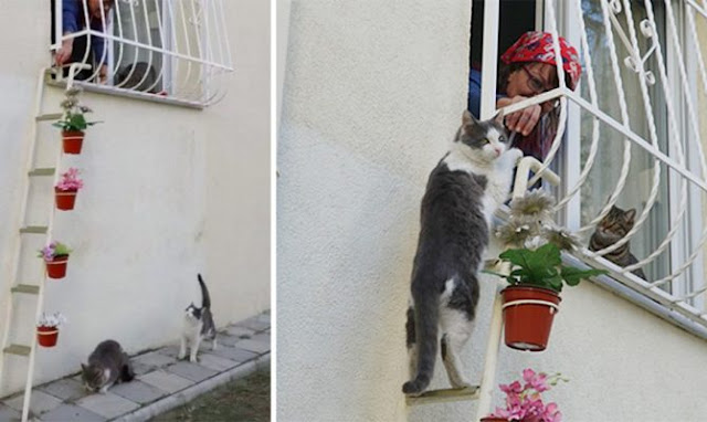 Γυναίκα έφτιαξε μια σκάλα για αδέσποτες γάτες για να μπαίνουν στο σπίτι της κάθε φορά που κρυώνουν