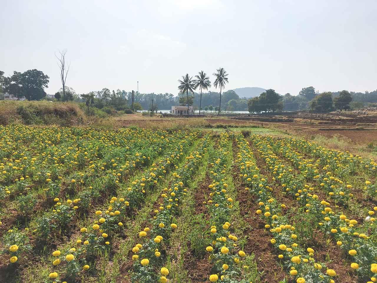 anu garden villa yelagiri price