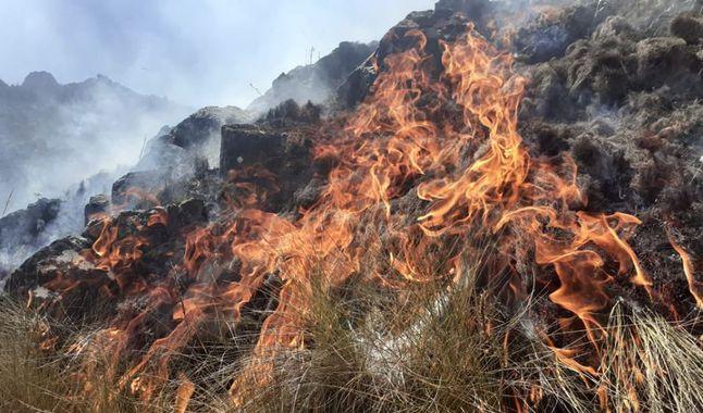 Incendios forestales en la Libertad han destruido más de 40 hectáreas de tierras