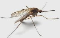 Insektenschutz, Stichfeste Kleidung, Mückendicht für die Risikogebiete in Afrika