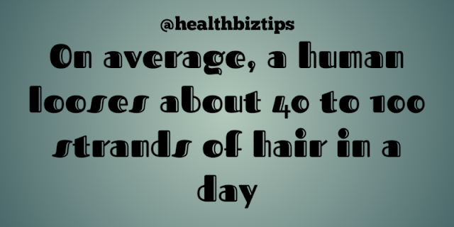 On average, a human looses about 40 to 100 strands of hair in a day.
