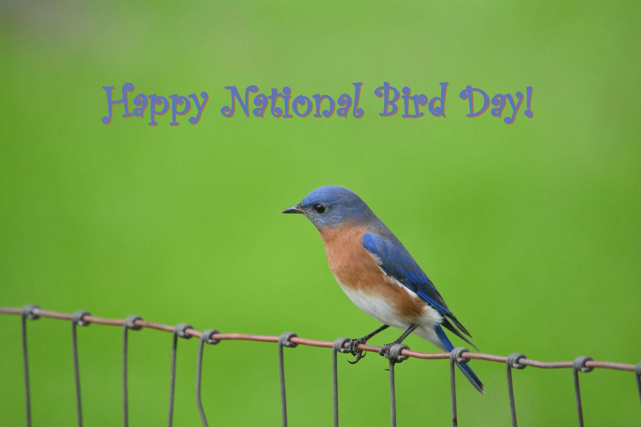 National Bird Day Wishes for Whatsapp