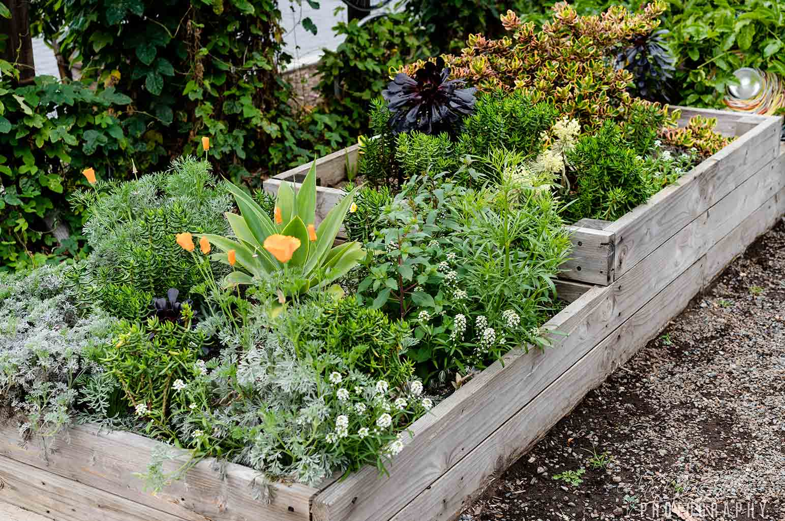 Tips For Gardening With Kids Annmarie John A Travel And