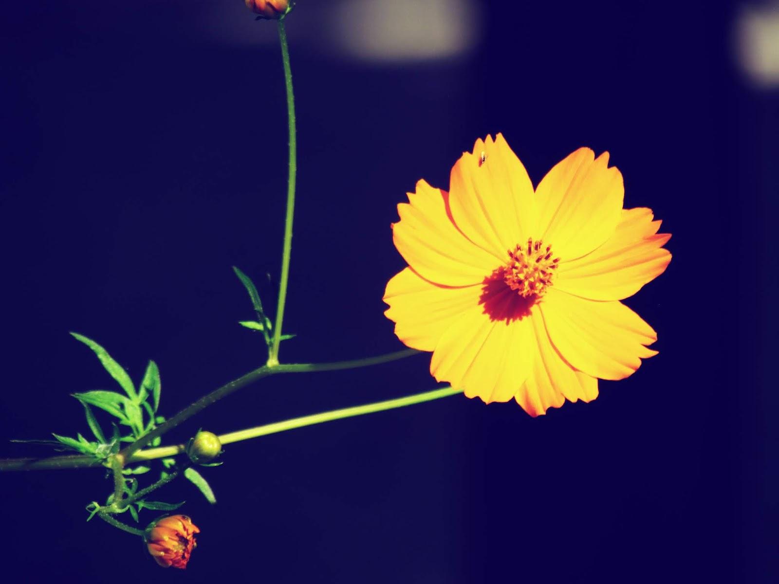 Orange Flowers in a butterfly garden in Hammock Park, Gloom and Glow lighting