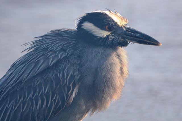 Floreana birds