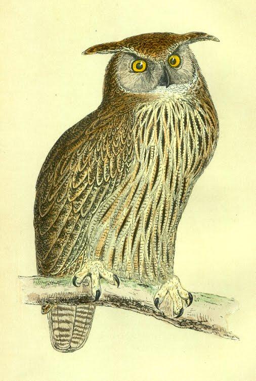ArtbyJean - Vintage Clip Art: Three Vintage prints of owls ...