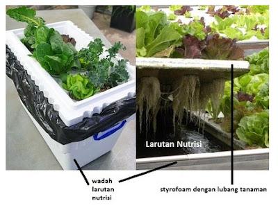 Menanam hidroponik sistem apung ( floating system )