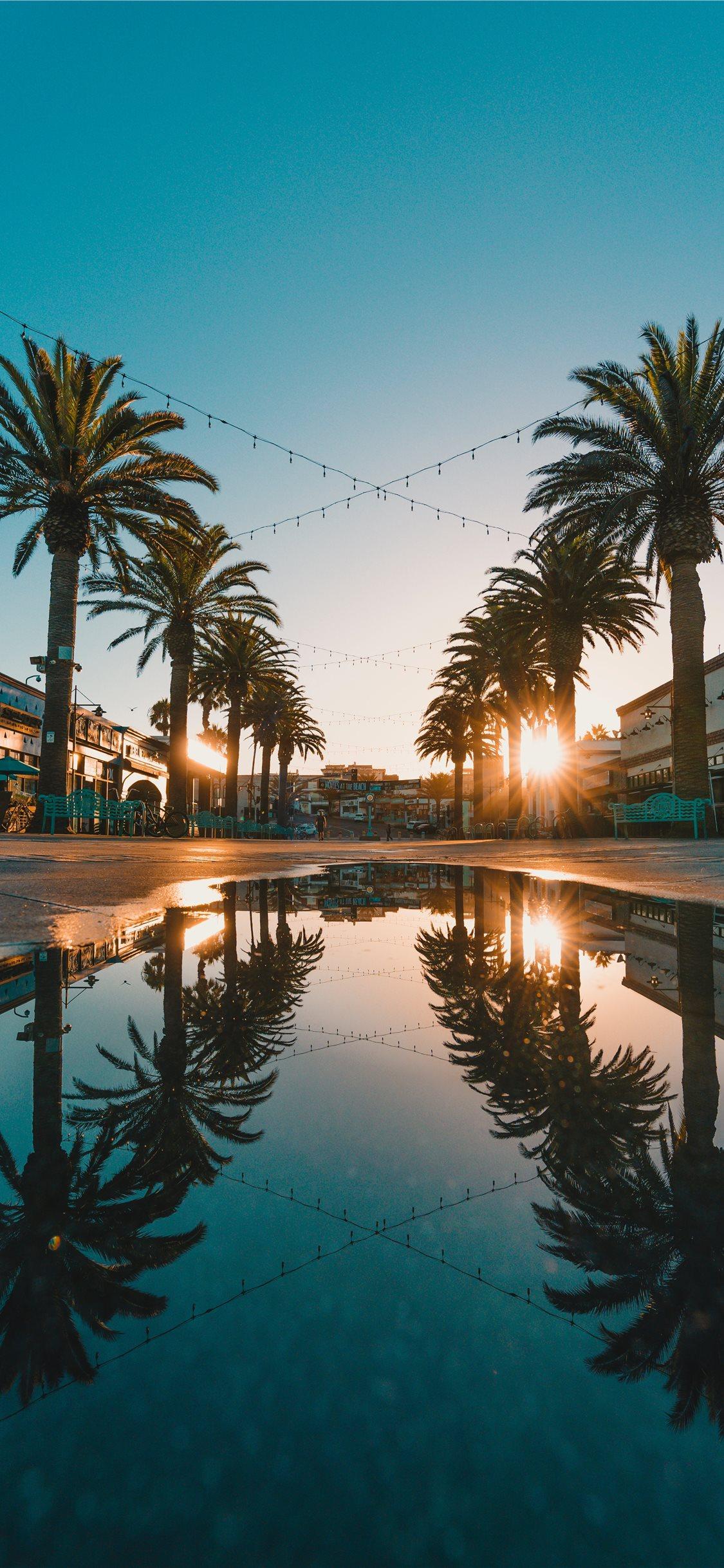 Palm Tree Sunset Iphone 11 Wallpaper