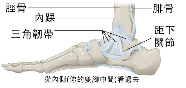 腳踝 三角韌帶