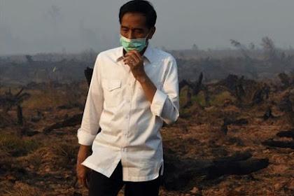 Jokowi Alumni Fakultas Kehutanan Yang Gagal Atasi Kebakaran Hutan