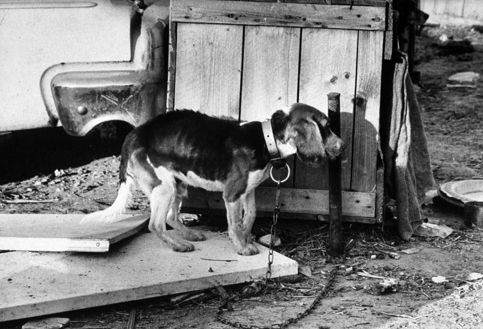 Concentration Camps For Dogs In 1966 Vintage Everyday