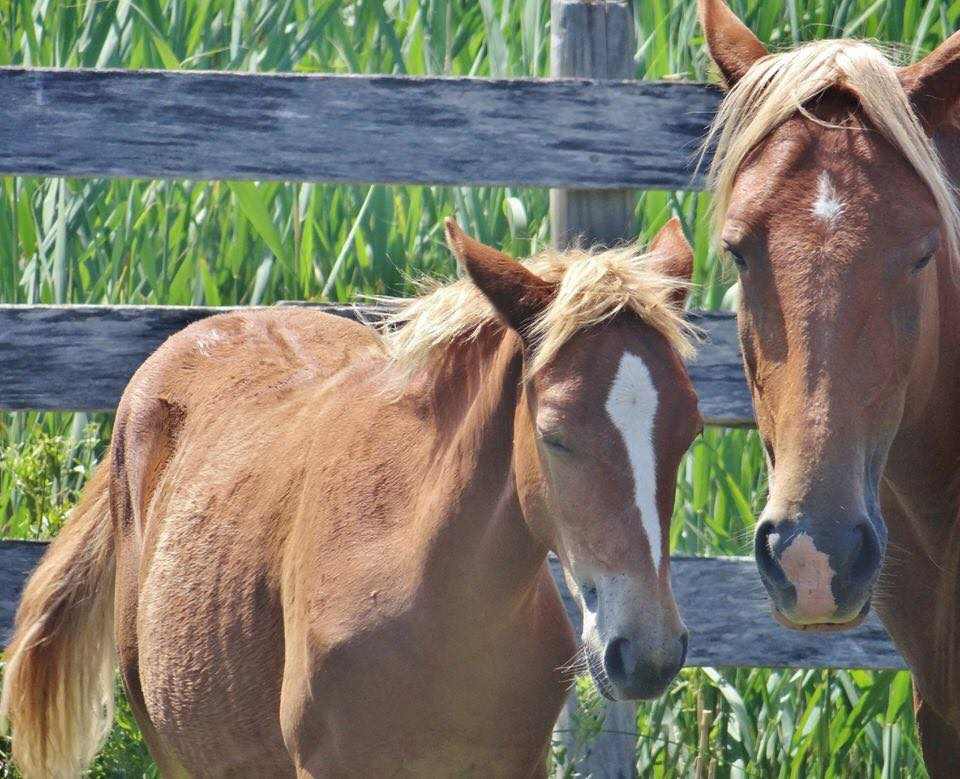 critter sitter s blog new pony names information from 2018 auction
