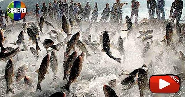 Miles de peces saltaron sobre el Río Orinoco en un espectáculo único