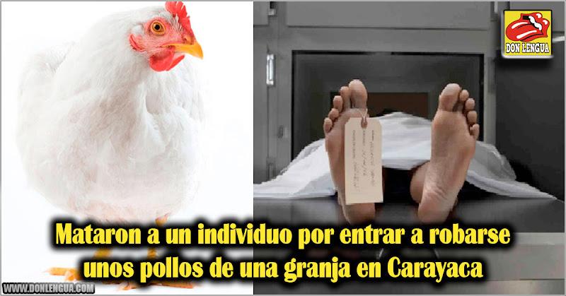 Mataron a un individuo por entrar a robarse unos pollos de una granja en Carayaca