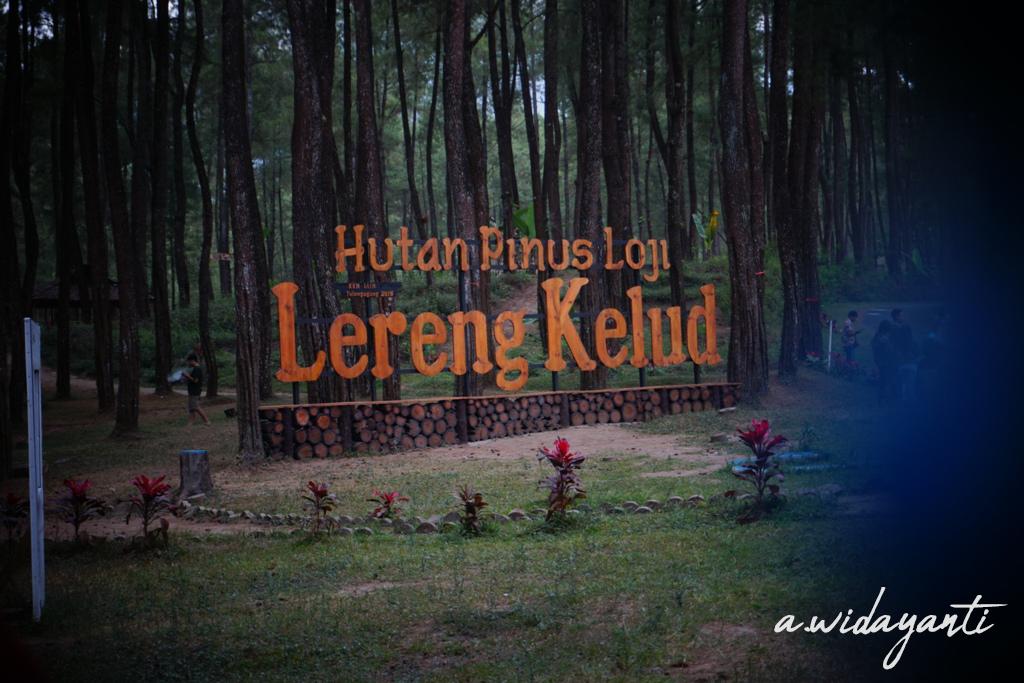 Hutan Pinus Loji Lereng Kelud