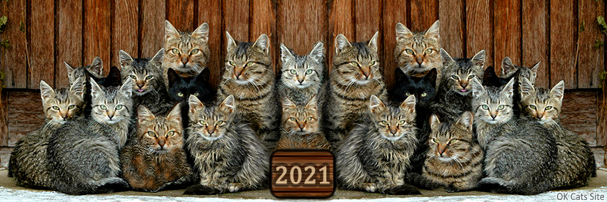 Photoshopped Cat picture • Purrfect annual family photo. Large family are happy family [ok-cats-site.com]