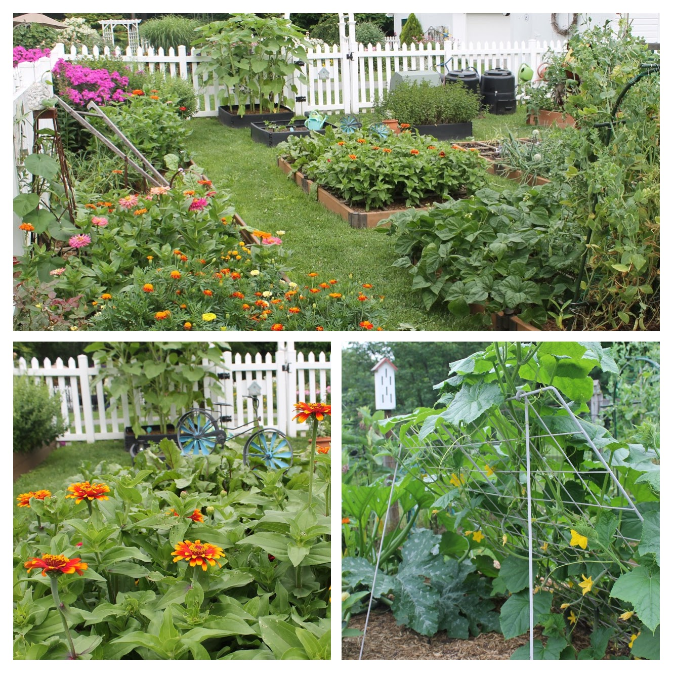 Successes And Failures In The Cottage Garden