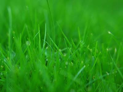 Színek jelentései: Zöld