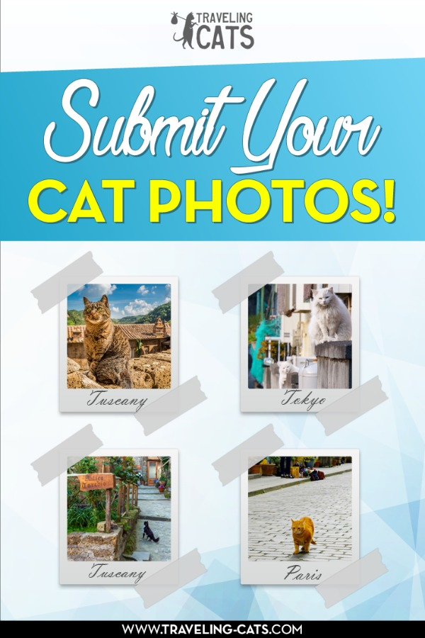 submit your cat pictures