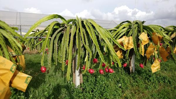 台中農改場有機栽培園區揭牌 發展有機農業示範基地