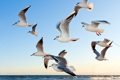 Aves en libertad y felicidad por los cielos