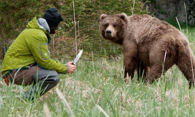 Медведица пришла за помощью к людям, рискуя жизнью ради спасения своего малыша