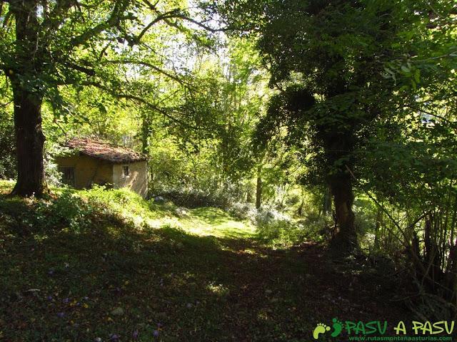 Cabaña y bosque de Cea