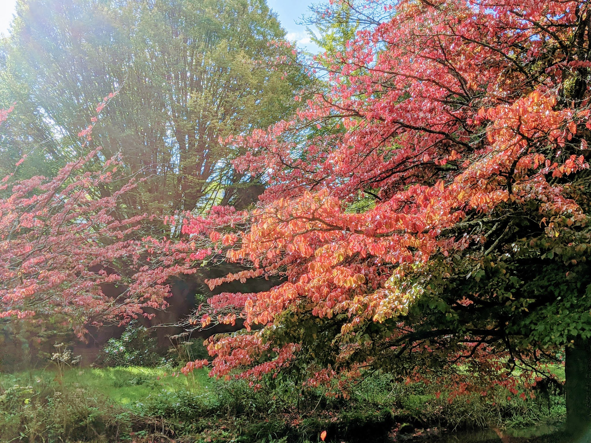 Autumn colour in Bournemouth gardens