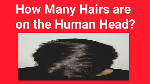 How Many Hairs are on the Human Head?