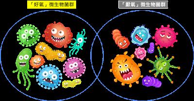 微生物菌種