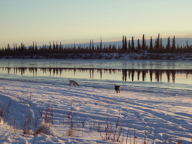 Anthropology, the evolution of behaviour, and training dogs: Dogs by the Mackenzie river