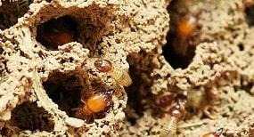 Faktor biotik (biologis) perusak kayu merupakan faktor yang berasal dari makhluk hidup (organisme) sehingga menyebabkan kerusakan pada kayu. Faktor biotik ini sebagai salah satu penyebab kerusakan kayu tertinggi apabila dibandingkan dengan faktor lainnya. Organisme yang termasuk ke dalam faktor biotik perusak kayu terdiri dari empat bagian yaitu bakteri, cendawan (jamur), bor laut (marine borer), dan serangga (Bowyer et al., 2003).