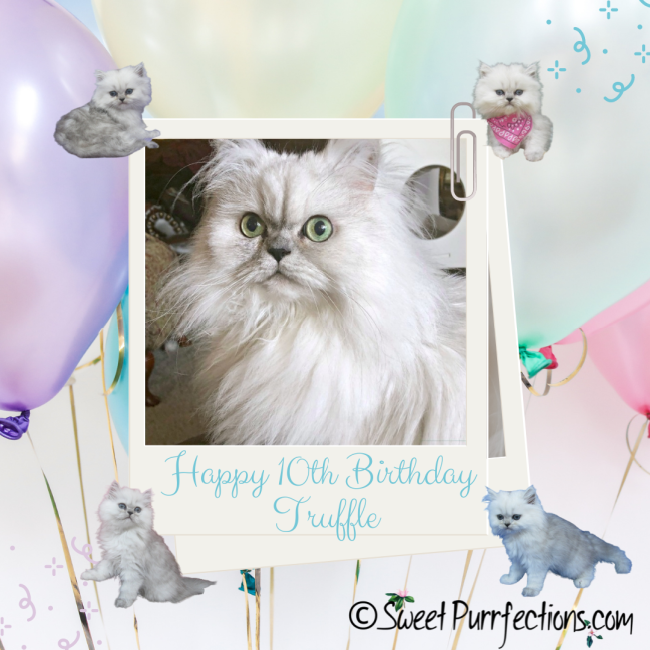 birthday graphic with silver shaded Persian, Truffle