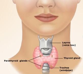 थायराइड के 7 शुरूआती लक्षण : Thyroid Symptoms in Hindi