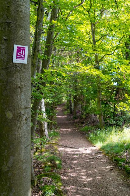 Traumschleife Baybachklamm | Saar-Hunsrück-Steig | Wandern Kastellaun | Premiumwanderweg Hunsrück 10