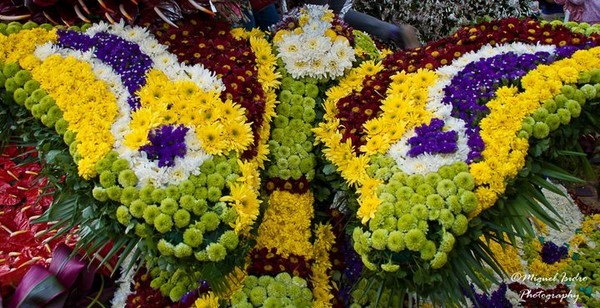 3 Implausible flower festivals of the world