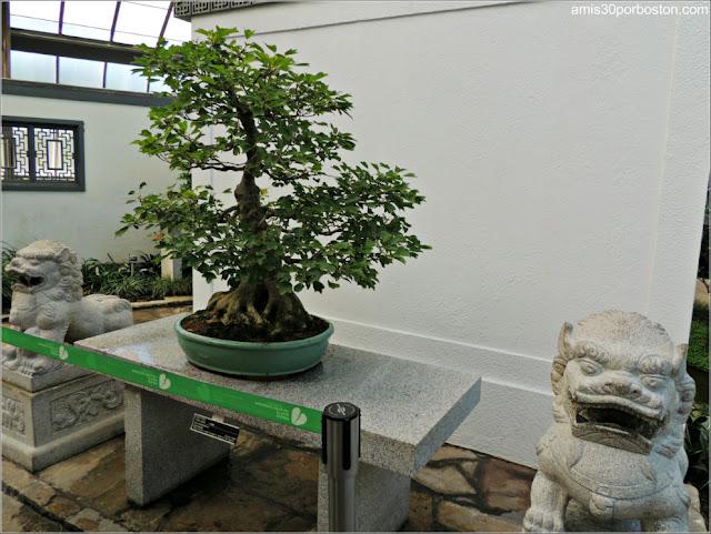 Garden of Weedlessness: Penzai