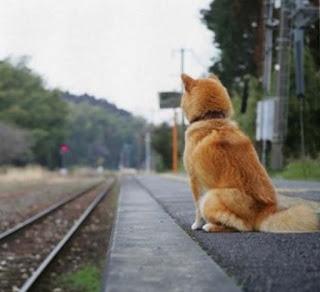 cães esperando na linha do trem