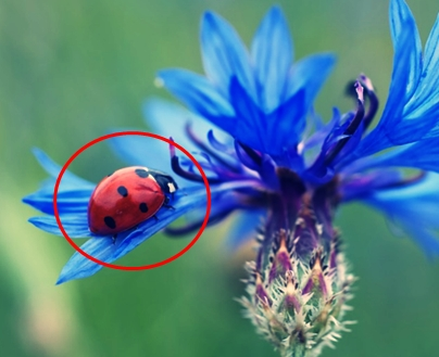 15 Ciri-Ciri Kumbang