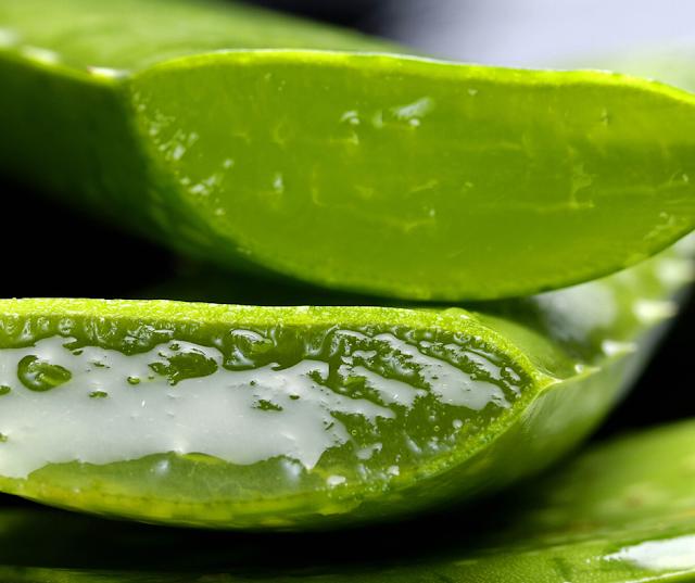 (الألوي فيرا Aloe vera) لنمو الشعر..اليك 4 استخدامات
