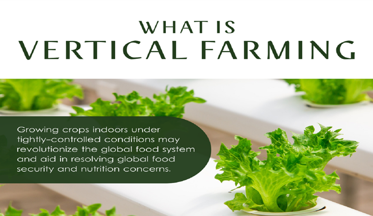 What is Vertical Farming #infographic