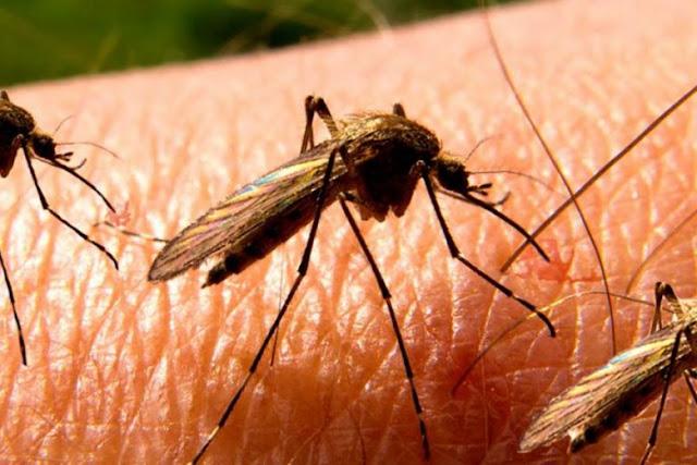 Στην Ελλάδα ο μεγαλύτερος αριθμός κρουσμάτων του ιού του Δυτικού Νείλου στην Ευρώπη