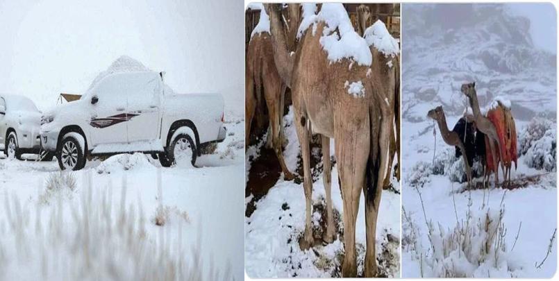 صور تساقط الثلج في صحراء المملكة العربية السعودية.png