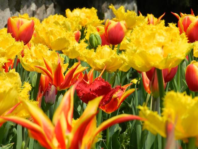 parco sigurtà tulipanomania