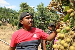 Agrowisata Kelengkeng Desa Sumberagung Jadi Primadona Baru di Grobogan
