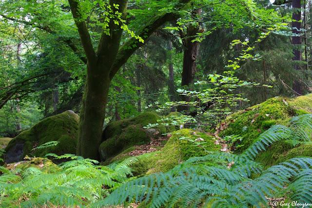 Fontainebleau une forêt périurbaine légendaires