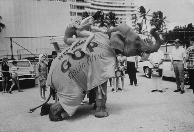 1968 RNC Florida the GOP elephant