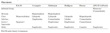 Famili Zingiberaceae