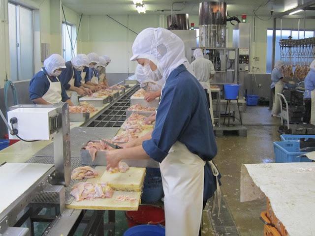 Tuyển 24 nữ làm công việc gia công xử lý thịt gà tại Kagoshima tháng 7 năm 2019