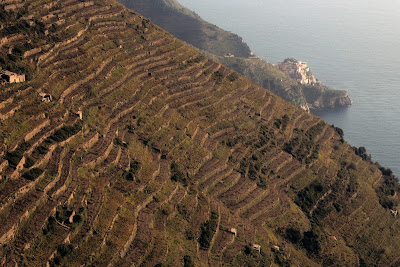 Overview of Cinque Terre terraced vineyards